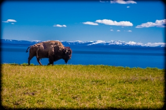 Buffalo 2.2